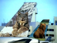 Frontier Airlines planes