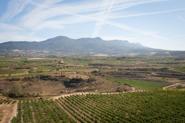 Rio wine region landscape