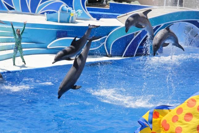 Dolphins SeaWorld San Diego