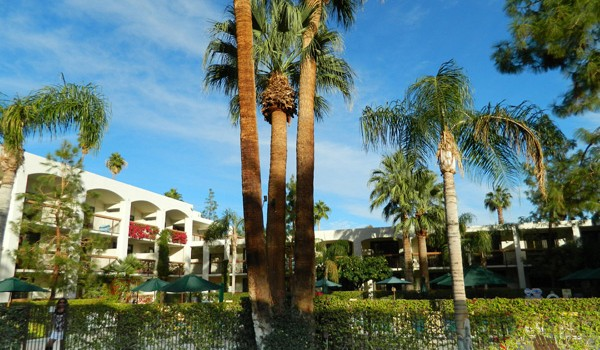 Garden at the Palm Springs Resort and Spa