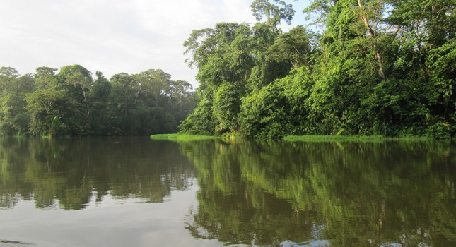 Rainforest in Tortuguero, Costa Rica
